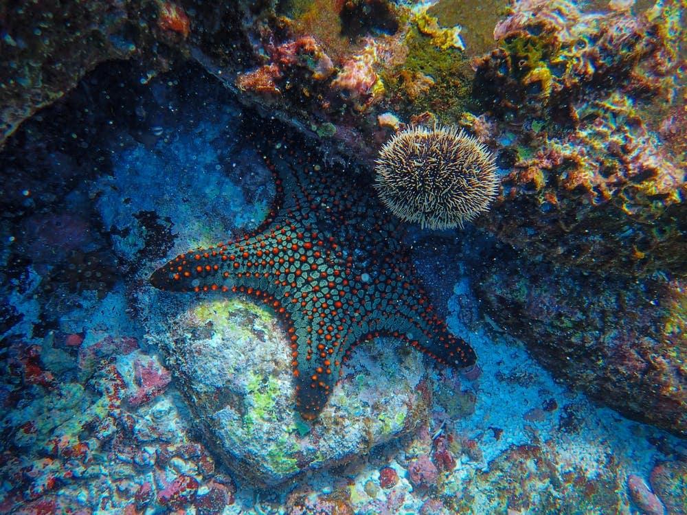 Civic Aquarium of Milan: Get Acquainted With Marine Life