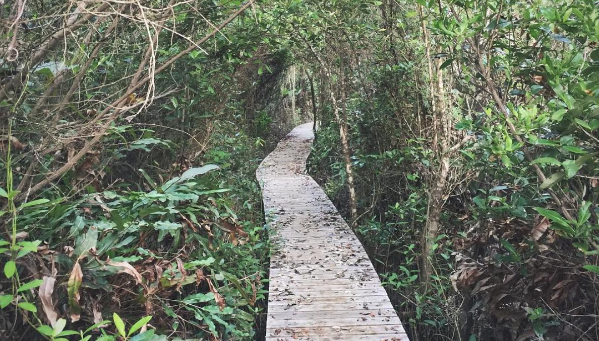 Mastic Trail (Grand Cayman)