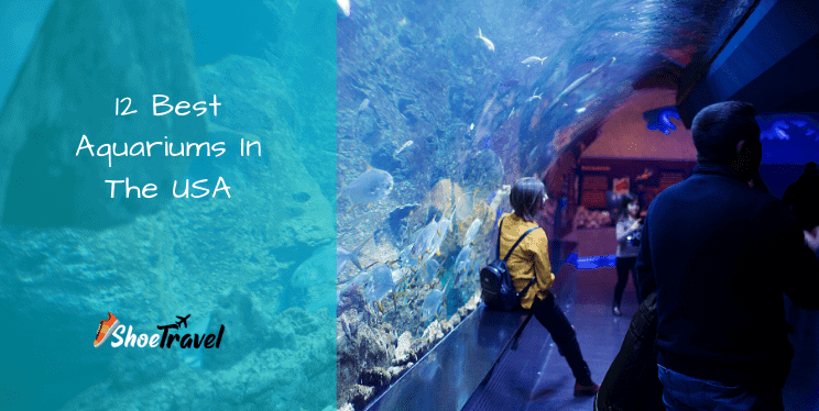 12 Best Aquariums In The USA